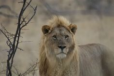 Lion Photography, Uk Trip, Self Driving, National Geographic, Safari, Highlights, National Parks, Travel, Animals
