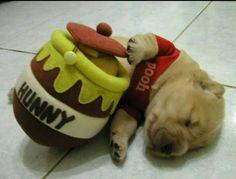 ahhhhh sooo adorable!!
