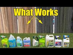 Cleaning mold mildew and algae from decks and fences seems simple, but it's important to learn about what's on your dirty fence and deck before you start. Cleaning Mold, Roof Cleaning, Cleaning Hacks, Cleaning Solutions, Cleaning Supplies, Pressure Washing Tips, Pressure Washing Business, Diy Cleaners, Cleaners Homemade