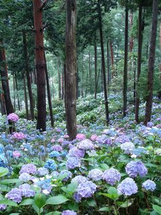 Hydrangea slopes - idea for meditation garden