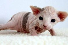 How can you not love this adorable little mutant-looking guy! The wrinkles! LOL