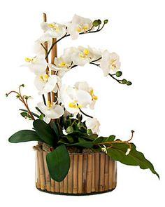 White Phalaenopsis & Bamboo Arrangement