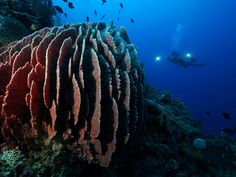 Coron Bay is home to the best wreck diving in the Philippines.   http://exploretraveler.com/ http://exploretraveler.net