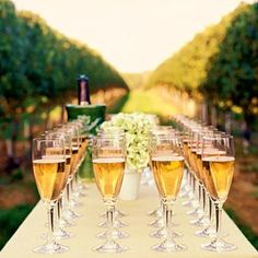 Tasting in the vineyard.