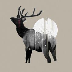 Illustrations / Ash White