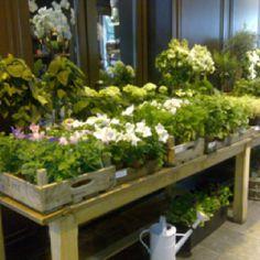 Bruxelles - Flower shop.