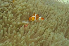 ギリメノ(West Nusa Tenggara, インドネシア)|ロンボク島とギリメノ(Shin  Okamotoさん) - 09