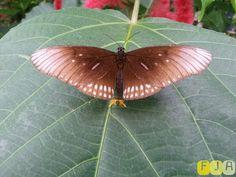 Cute butterfly in Emmen