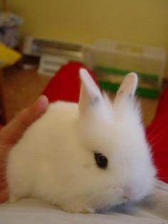 Cute rabbit.