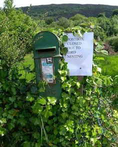 Not one I took myself but remembered it from a news story . Irish post box not in use due to bird nesting in Cavan Ireland Scotland Travel, Ireland Travel, Traditional Irish Names, Champs, Funny Headlines, Countryside Village, Irish Eyes Are Smiling, Irish Culture, Irish Cottage