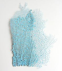 Beach Decor  Turquoise Sea Fan  Authentic Specimen by CereusArt, $12.00