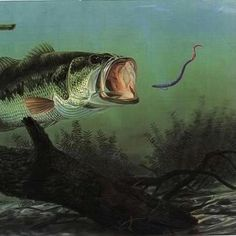 Bass paradise and poster on pinterest for Fishing youtube channels