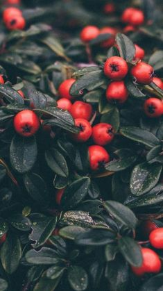 plants aesthetic – – Best Home Plants Wallpaper Winter, Nature Iphone Wallpaper, New Year Wallpaper, Aesthetic Iphone Wallpaper, Christmas Wallpaper, Aesthetic Wallpapers, Wallpaper Ideas, Aesthetic Light, Plant Aesthetic