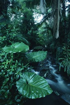 Rainforest - Fotobehang & Behang - Photowall