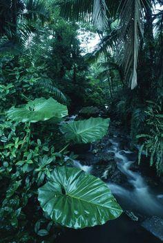 Rainforest - Fotobehang & Behang - Photowall