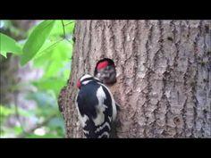 Rähniblogi Birds, Nature, Animals, Youtube, Naturaleza, Animales, Animaux, Bird, Animal