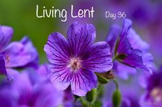 "'Living Lent': Wednesday of the Fifth Week of Lent - Day 36   ""Blessed are they who have kept the word with a generous heart and yield a harvest though perseverance."" (John 14:6)  #lent #Catholic #Pray #jesus #Lent2017"