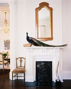 Fireplace Mantel Photo - A stuffed peacock beside a wood-frame mirror on a white mantel