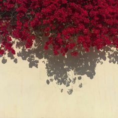 Find images and videos about aesthetic, flowers and red on We Heart It - the app to get lost in what you love. Flower Aesthetic, Red Aesthetic, Aesthetic Pictures, Aesthetic Photo, Flower Backgrounds, Flower Wallpaper, Wallpaper Backgrounds, Red Flowers, Beautiful Flowers