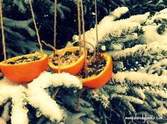 Orange Bird Feeder DIY