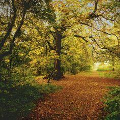 Efterår i skoven vægfototapet