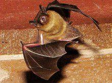 #NeedPestControl #Got #Bats Call (519) 893-7378 AnimalsGetOut.com