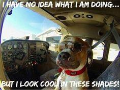 Happy National Take Your Dog To Work Day! #aviationhumor #tgif #takeyourdogtoworkday #aviators