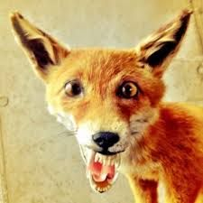 Taxidermy is an art form, one that honors deceased animals and gives them new life. But sometimes, the art is bad -- and equally terrifying. Bad Taxidermy Fox, Faux Taxidermy, 3d Archery, Laughter Therapy, Awkward Photos, House Furniture Design, Funny Faces, Art Forms, Pop Culture