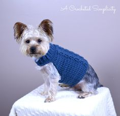 The Cabled Crusader free dog sweater pattern by A Crocheted Simplicity