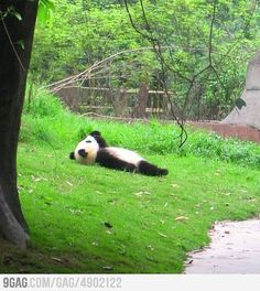Just a panda watching the clouds...