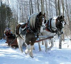 I would LOVE to go on a horse drawn sleigh ride through the snow one day. Big Horses, Work Horses, Pretty Horses, Horse Love, Most Beautiful Animals, Beautiful Horses, Winter Horse, Dashing Through The Snow, Winter Scenery