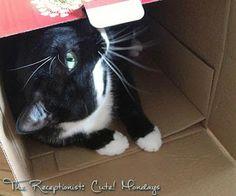 The Receptionist: Cute! Cat in a Box. #catpicture #cute