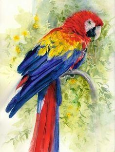 """""""Scarlet Macaw"""""""