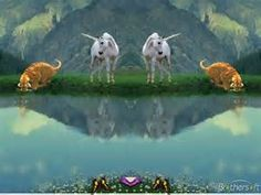 reflections - Bing images