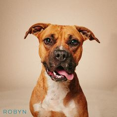 """11/15/16-Cypress, TX - """"While RA was in Tulum celebrating her 50th birthday, little did she know that I would be found chained, living in the mud, with no food or clean water, get picked up by animal control, and taken to the shelter, then named after her! Robyn is available for adoption through Saving Pets Lives"""