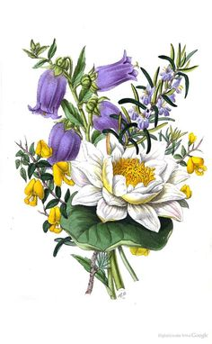 The poetical language of flowers; or The pilgrimage of love - Thomas Miller - Google Knihy