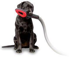 Wil je mij borstelen en tegelijk mijn losse haren stofzuigen? #cofix #hondenborstel #hond zie link in bio voor meer info