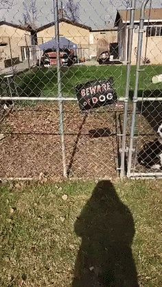 BEWARE of DOG https://gfycat.com/KaleidoscopicCookedGoldfish