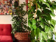 Evin havasını temizleyen bitkiler - Canım Anne Aloe, Plants, Eco Garden, Climbing Vines, Backyard Landscaping, Plant, Planets, Aloe Vera