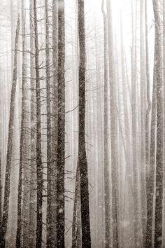 "Larry Blackwood, ""forest of the silent 4"" larryblackwood.com"