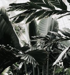 Image discovered by I C H I. Find images and videos about nature, green and plants on We Heart It - the app to get lost in what you love. Moringa, Plants Are Friends, Green Life, Green Plants, Slytherin, Belle Photo, Botany, Palm Trees, Indoor Plants