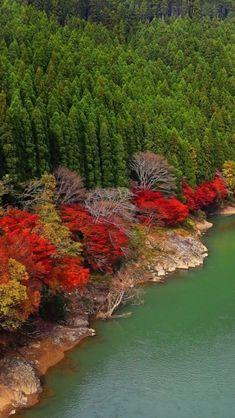 autumn_river_forest