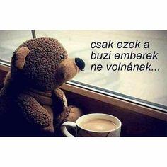 Good Day, Haha, Jokes, Teddy Bear, Motivation, Comics, Funny, Animals, Wallpapers