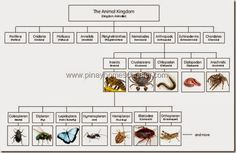 The Arthropods Chart