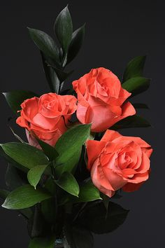 Such beautiful Roses