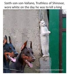 Com - humour animaux - funny hilarious cute animals Animal Jokes, Funny Animal Memes, Dog Memes, Funny Animal Videos, Cute Funny Animals, Funny Animal Pictures, Cute Baby Animals, Funny Cute, Funny Dogs
