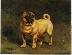 vintage pug | vintage pug portrait