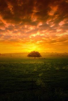 Blazing sunset with tree