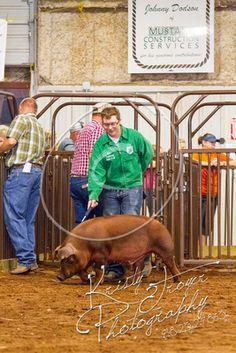 #MayesCountyFair #4H #FFA #pigs
