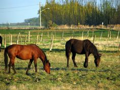 Content horses grazing in and around Manitou are examples of why we enjoy the simple abundant joy of connection with the animal world in our country lifestyle.